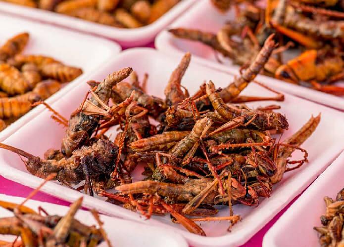 Belalang salah satu jenis serangga yang dapat dikonsumsi